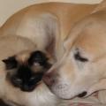 câlins entre chat et chien<br />