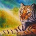 Tigre serein, 50 x 36 cm<br />