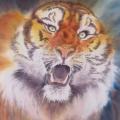 Tigre en colère, 27 x 37 cm<br />Haïku de B. Briatte : Rictus de crocs - Le rauque dévorant Ses râles
