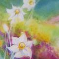 Narcisses II, 23 x 32 cm<br />