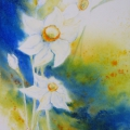 Narcisses III, 23 x 32 cm<br />