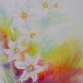 Narcisses, 23 x 32 cm<br />