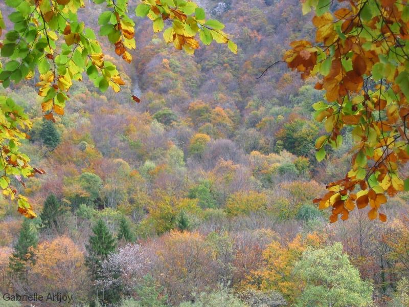 flanc de montagne en automnee