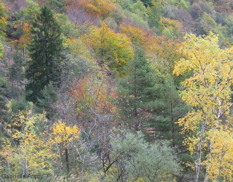 flanc de chartreuse en automne