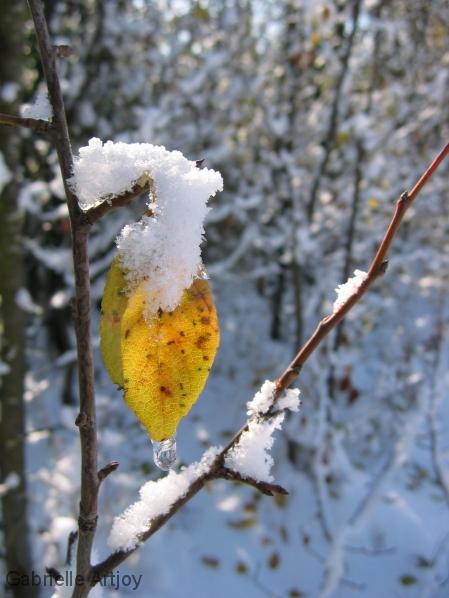 feuille d'automne et neige