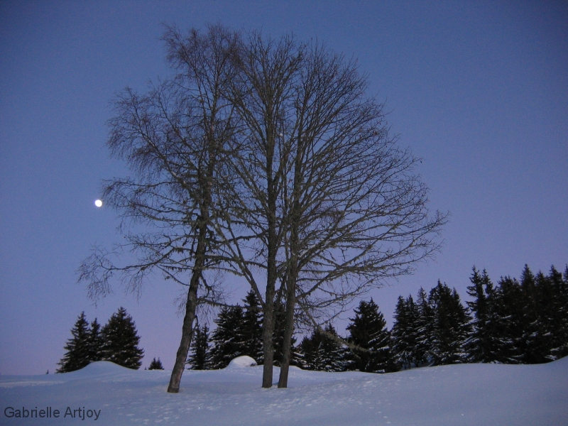 lever de lune entre les arbres