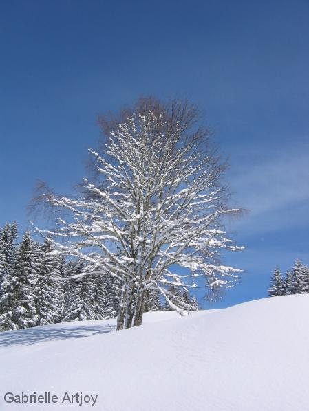 silhouette d'arbre soulignée par la neige