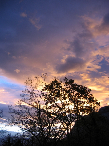 arbres devant un ciel de soleil couchant