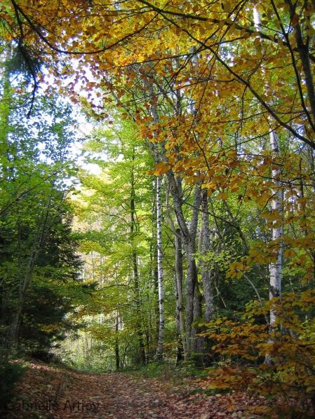 forêt mixte en automne