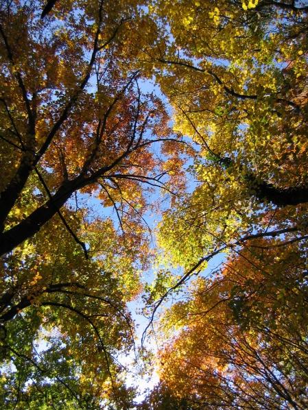 feuillages d'automne et ciel bleu