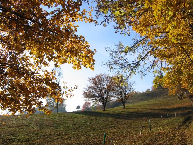 colline en automne