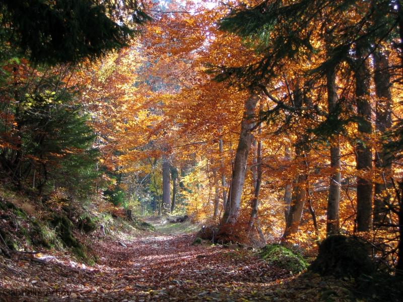 forêt de montagne en automne