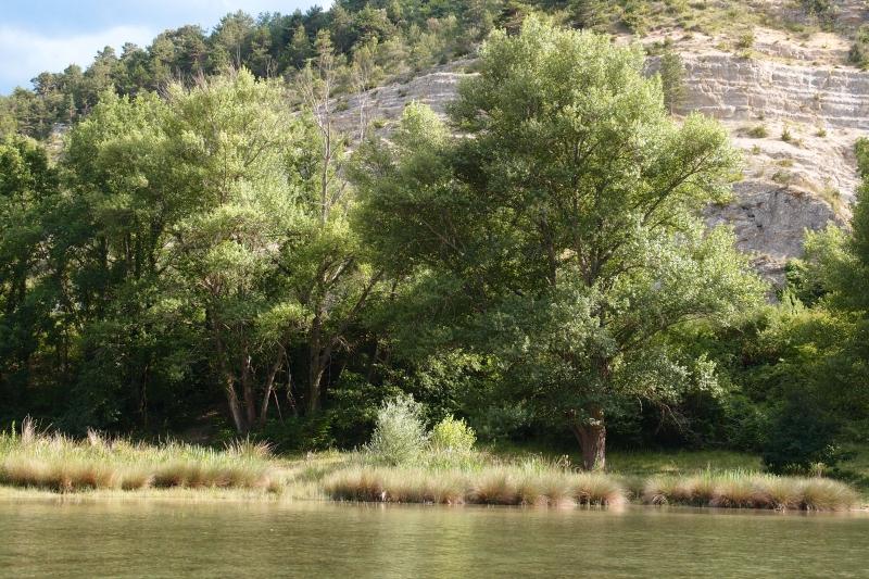 arbres en bord d'étang