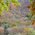 flanc de montagne en automnee<br />