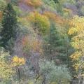 flanc de chartreuse en automne<br />