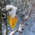 feuille d'automne et neige<br />