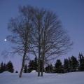 lever de lune entre les arbres<br />