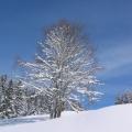 silhouette d'arbre soulignée par la neige<br />