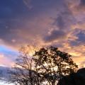 arbres devant un ciel de soleil couchant<br />