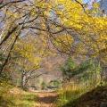 sentier en automne<br />