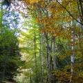forêt mixte en automne<br />