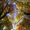 feuillages d'automne et ciel bleu<br />