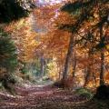 forêt de montagne en automne<br />