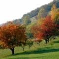 cerisier en automne<br />