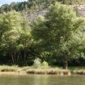 arbres en bord d'étang<br />