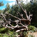 arbre mort<br />