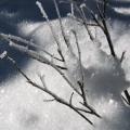 branches d'arbuste et neige<br />