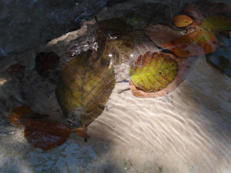 Feuilles mortes, jeux d'ombre, de lumière, reflets dans l'eau cristalline