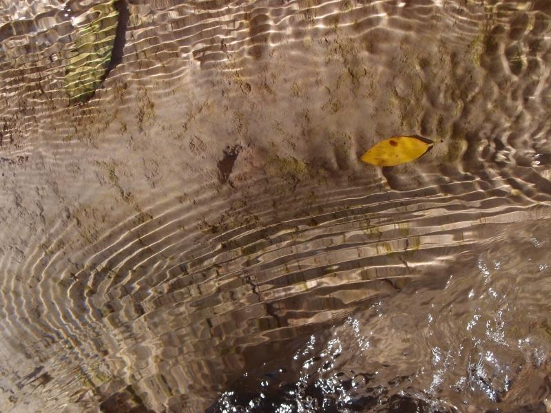 Feuille morte, jeux d'ombre, de lumière, reflets dans l'eau cristalline