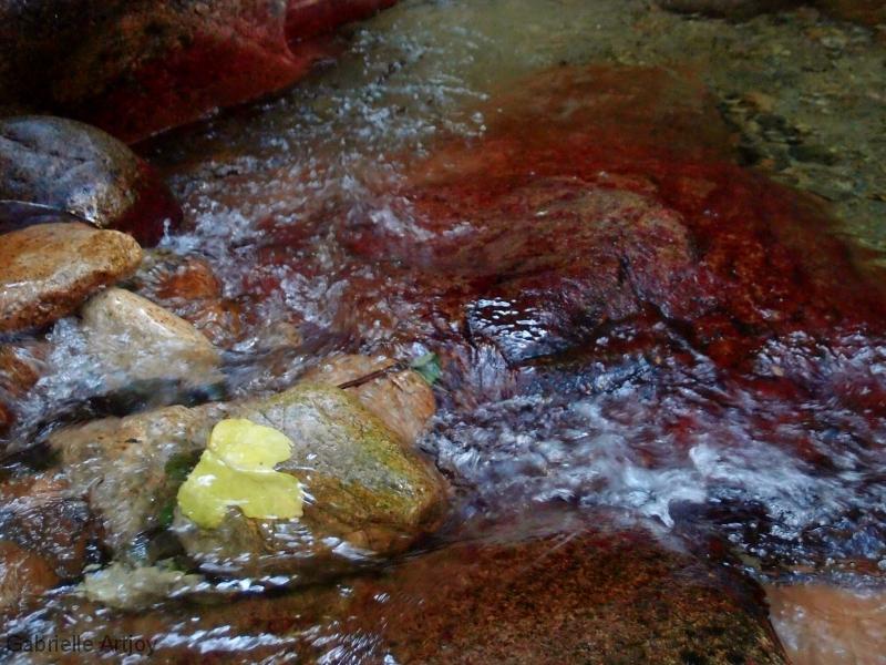 Feuille d'automne dans un torrent